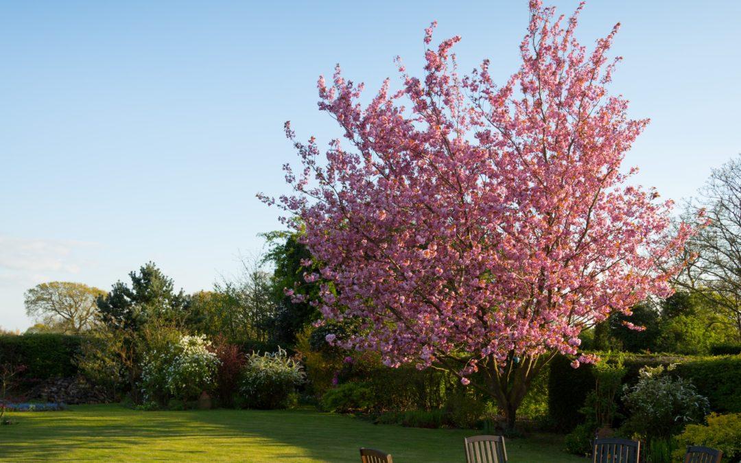 Tareas a realizar en el jardín durante el mes de febrero