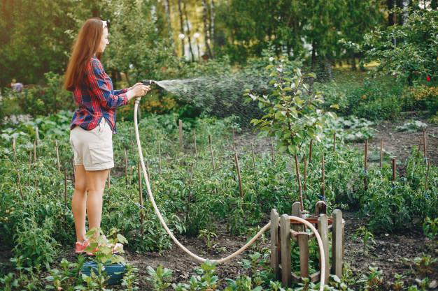 ¿Regamos correctamente nuestras plantas?