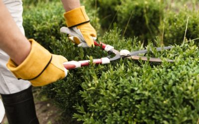 Com fer un tancament vegetal al nostre jardí?