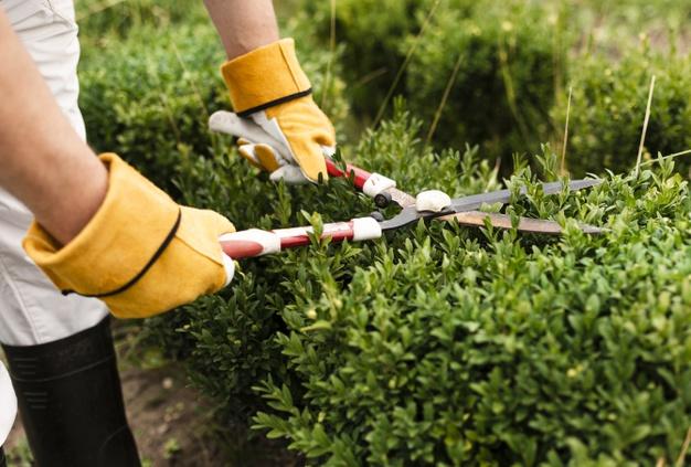 Cómo hacer una valla vegetal en nuestro jardín?