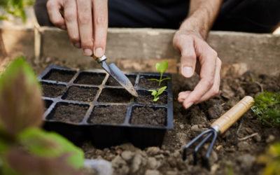 El jardí en el mes de març, comença la feina
