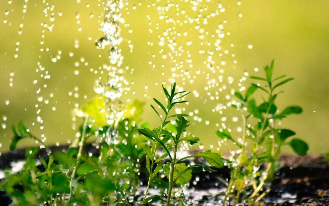 La importancia del riego en verano